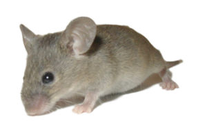 Poison Free Rodent Control