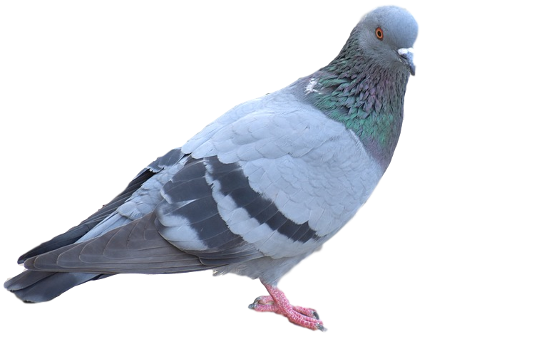 Michigan Bird Control Services
