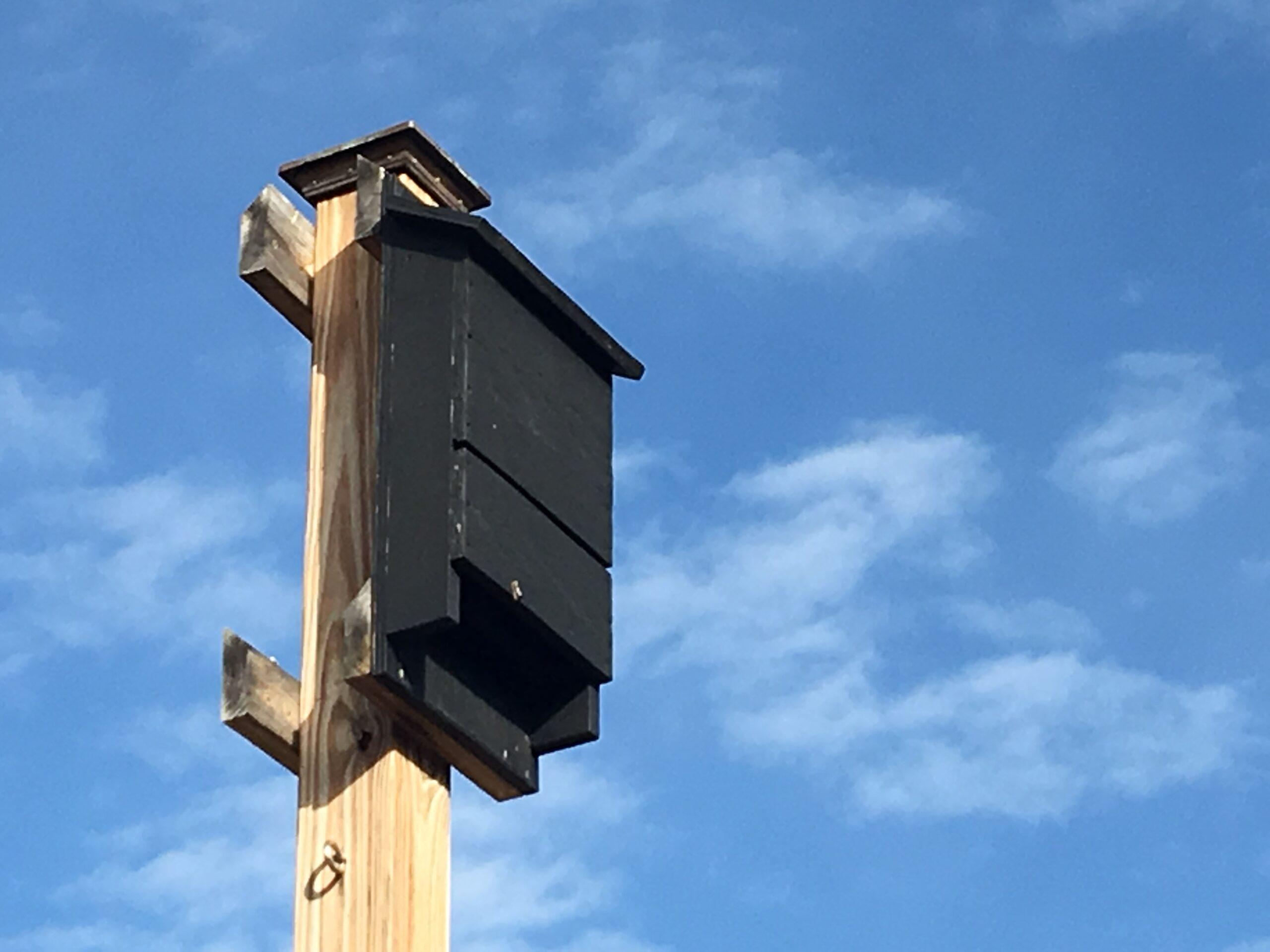 Bat House Installation Services