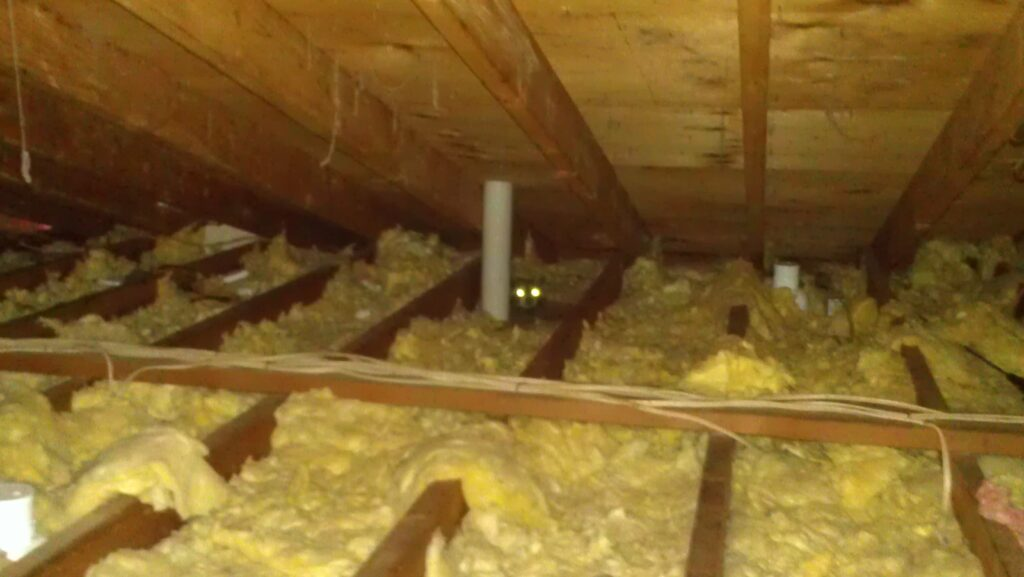 Raccoon causing damage to the insulation