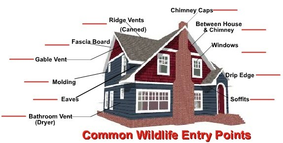 Common Wildlife Control Entry Points